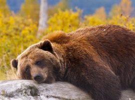 Медвежьи тенденции мая и их влияние на торговлю в первый летний месяц